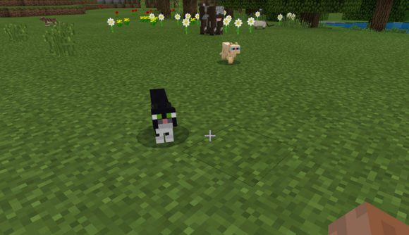 Mojang Wants To Put Your Cat In Minecraft