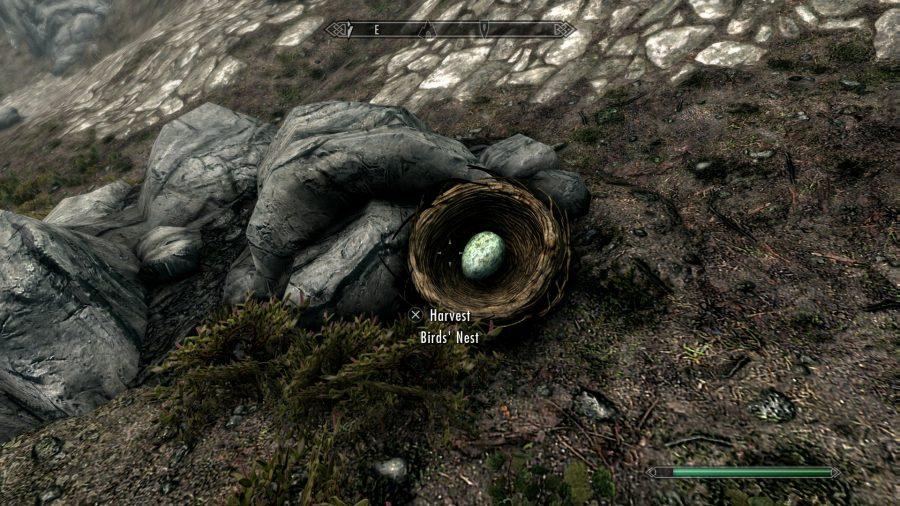 Skyrim bird nest