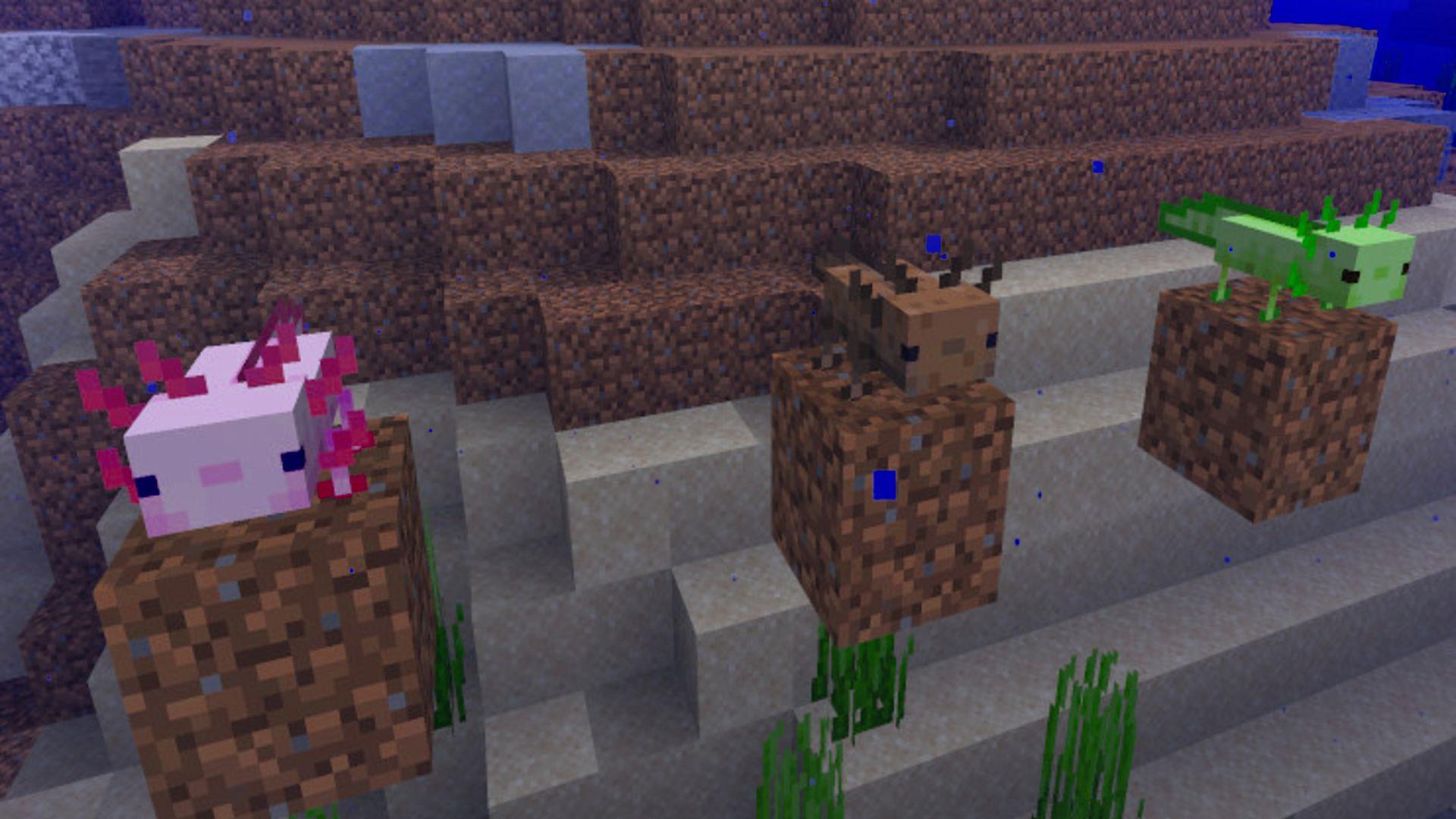 Minecraft Axolotl – everything we know