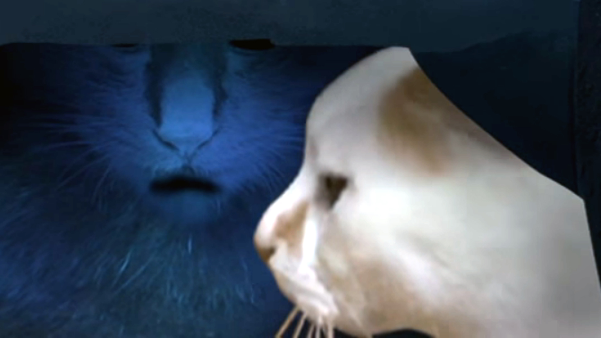 J-horror Tsugunohi features The Grudge for cats