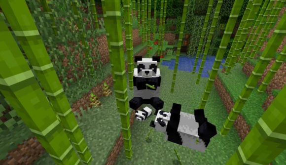 Minecraft pandas hang out in a bamboo forest