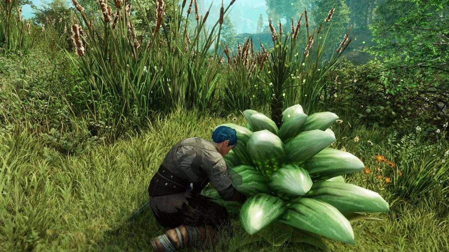 A character crouching next to a unique, magical plant in New World