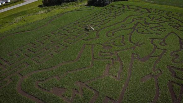 Anthem corn maze
