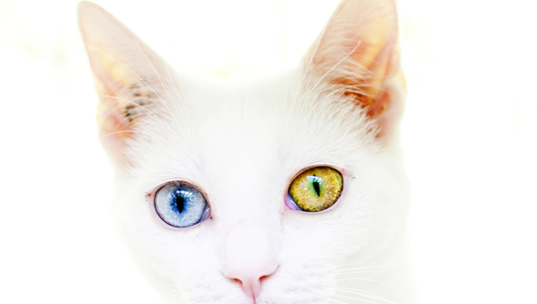 Cat Simulator promises to be your first next-gen stop for accurate cat simulation.