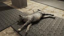 fallout 76 cat