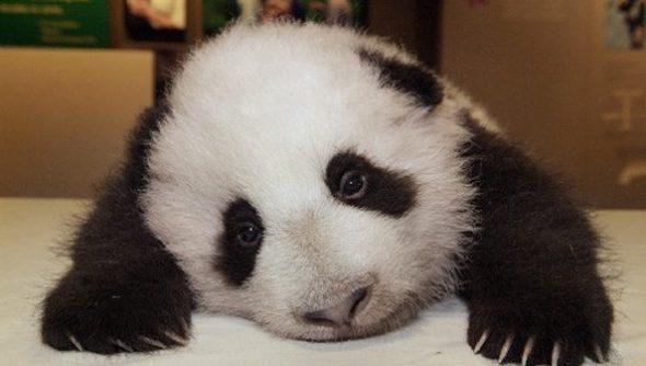 world_of_warcraft_sad_panda